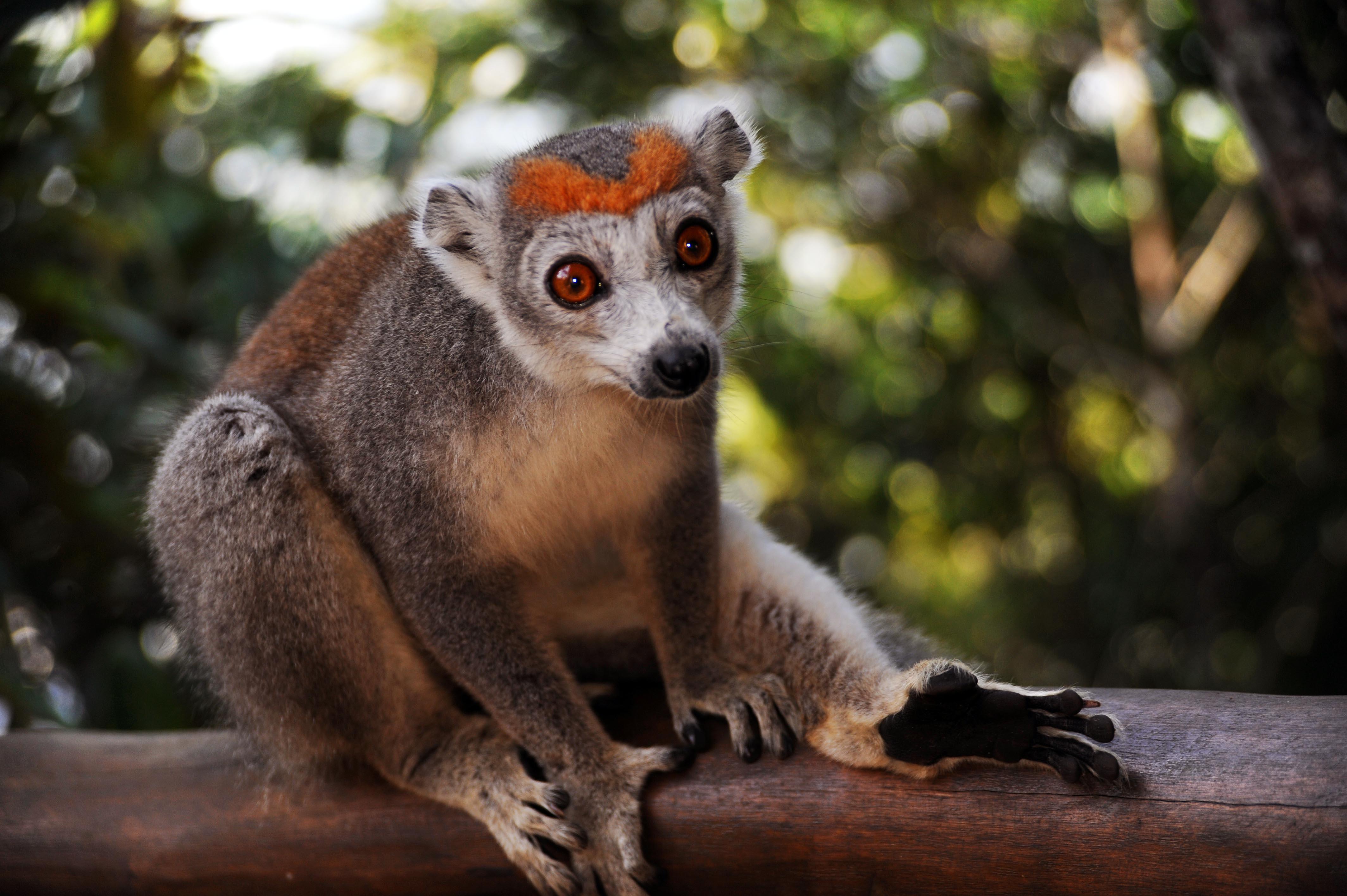 "Privatrundreise ""Madagaskar - Der Lemuren Pfad"""