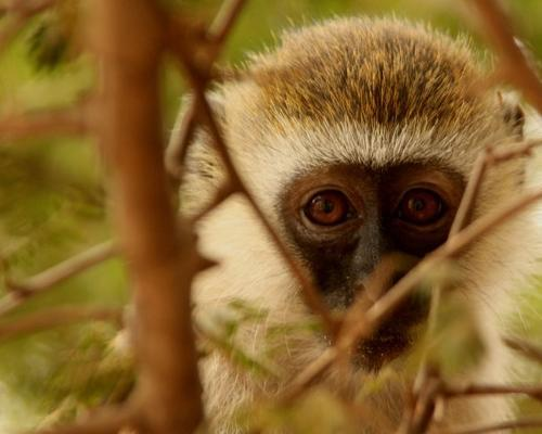 Kenya: Safari Habari Gani (7D/6N)