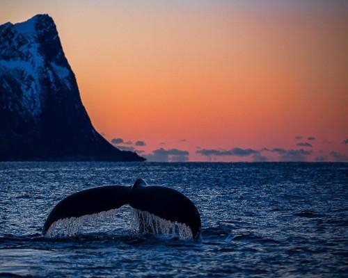 Ballenas, Auroras y Cabo Norte en invierno