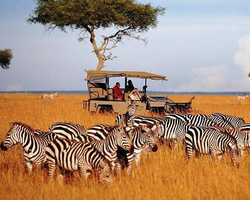 Kenya: Safari Asali (6D/5N)