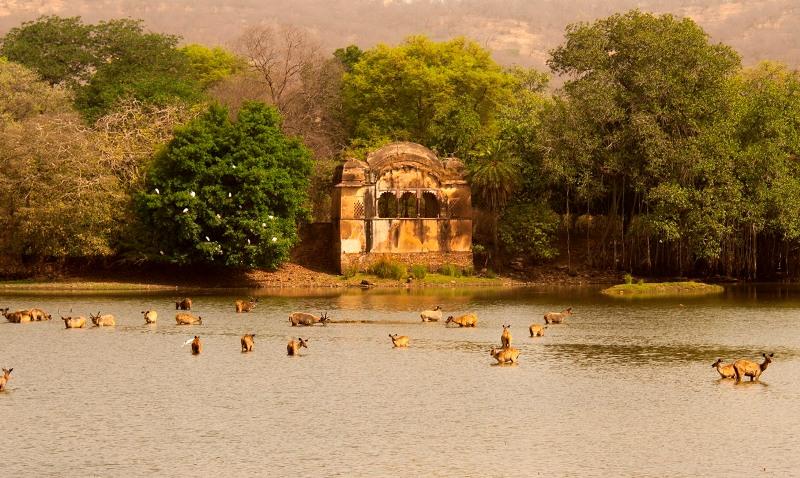 India: Taj y Tigres ( 8D/7N )