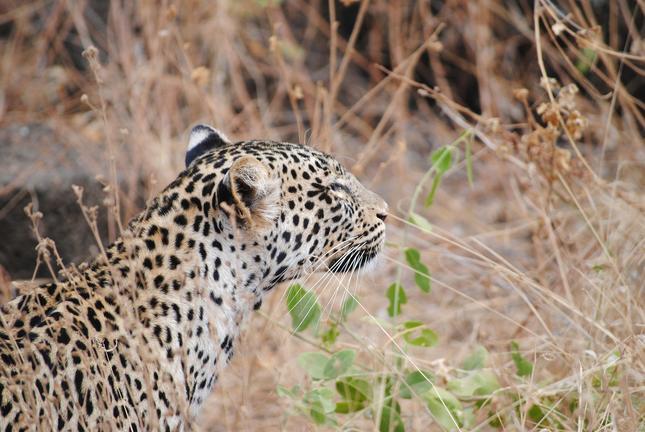 """Rundreise """"Klassische Safari Kenia"""""""