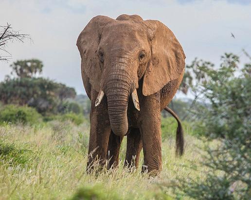 Kenya, Safari Ndoto 7D / 6N