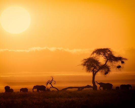 Kenya, Safari Kilima 7D / 6N