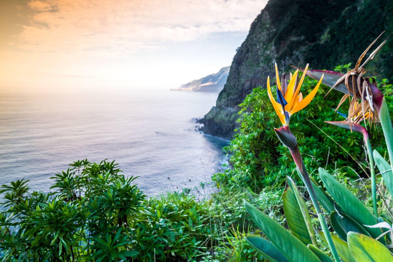 Óceánparti nyaralás: Madeira utazás repülővel és szállás