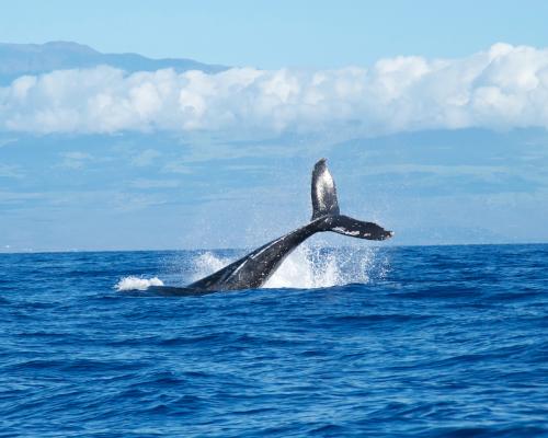 Dom. Republik: Nationalparks, Walbeobachtung & Badeurlaub
